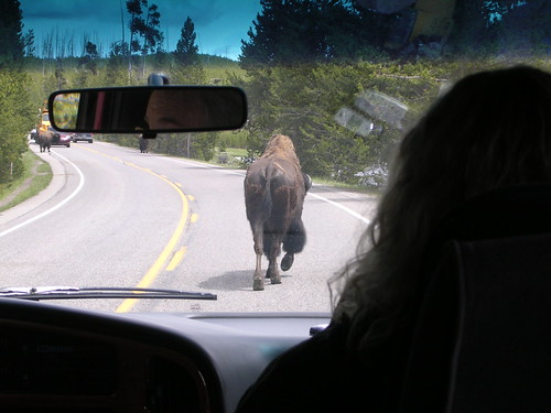 Yellowstone Rush Hour