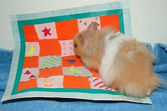 Ami And His Quilt