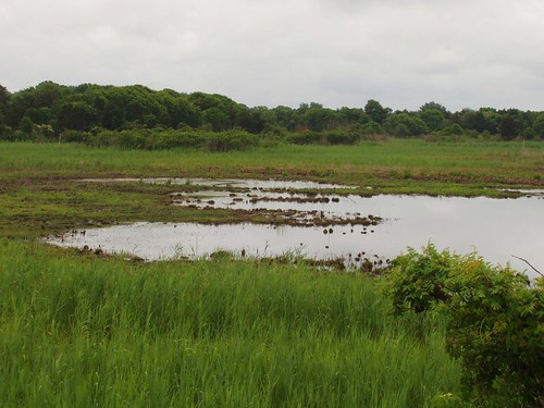 Cape May Wetlands 4