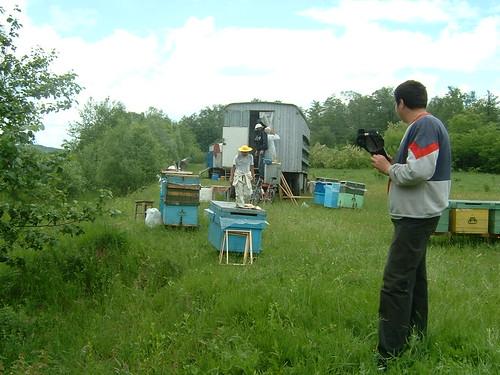 Silmariat, el apicultor