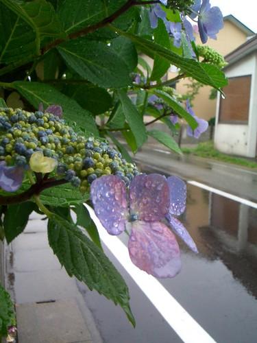 raindrops...