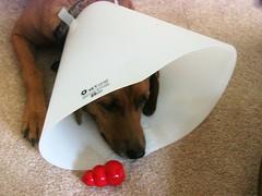 Gus in a cone