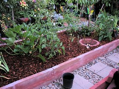 Veggie Bed #1 with Ground Bark Mulch (After)