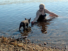 Lacey coaxed into the water