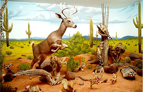 Natural History Museum Las Vegas Coupon