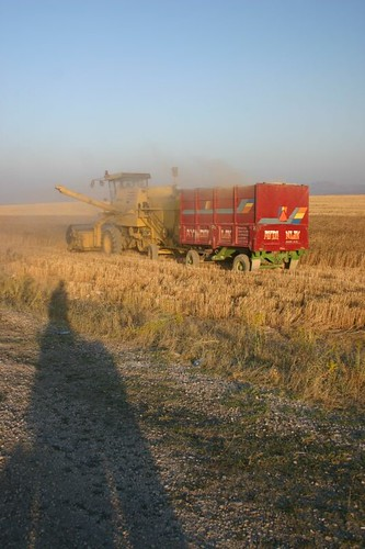 Harvest time at Lake Van, Turkey.