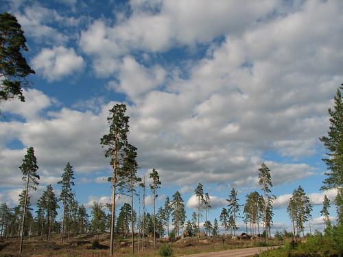 Sky, Trees, Land