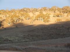 Jodinėjimas Australijoj