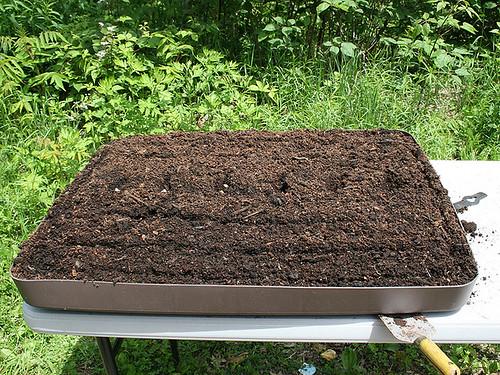 lettuce plot 7