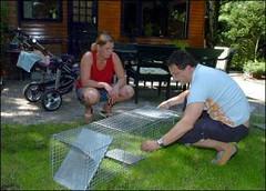 Zwerfkatten zorgen voor overlast op camping