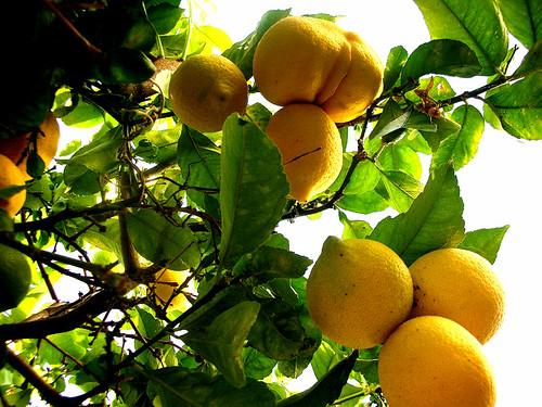 lemons up
