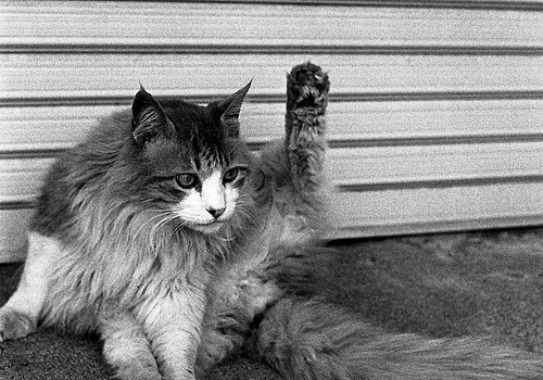 手を上げて
