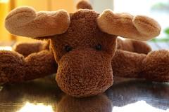 Ceci n'est pas un moose