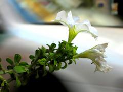 La flor de la vida del taxi RETOCADA