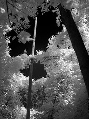 Infrared vision, Passmore Avenue (abandoned), 12