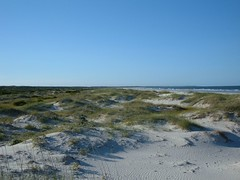 The Dunes of Cumberland Island, GA
