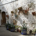 potted plants on an old wall