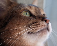 closeup_kitty
