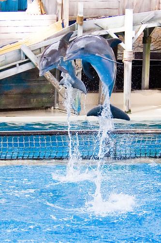 Dolfijn in de lucht