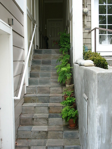 random maidenhair steps