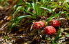 22174247210_9ceae6bb79_t