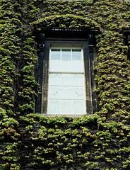Window and Ivy, Bath