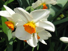white flower with orange