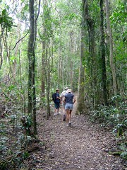 DSC00537 - Lamington bush walk