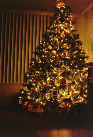 Tree 2003