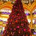galeries tree
