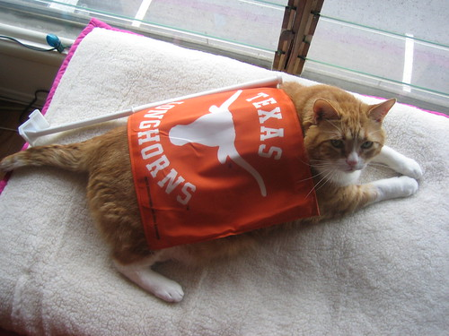 this cat bleeds orange!
