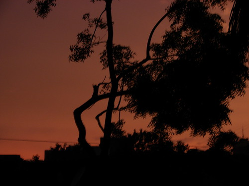 Sunset Last Night - Adarsh Nagar - The Curving Tree