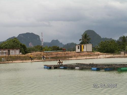 Tg Rambutan Pond 05