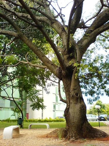 árvore e banco