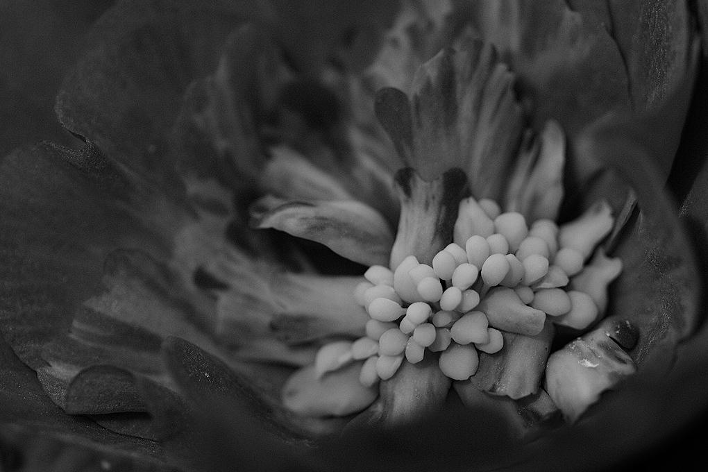 Cottage Porch Flower bw