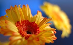 Yellow and Orange with a Hint of Blue photo by Talis