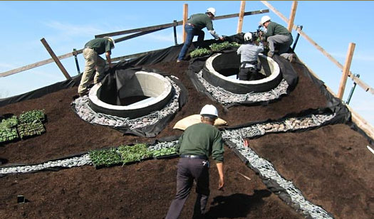 green roof, rana creek, living wall, CABoom, paul kephart, freya bardell, sustainable design, green design, sustainable architecture, green architecture, living roof, green building, natural roofs, sustainable roofs