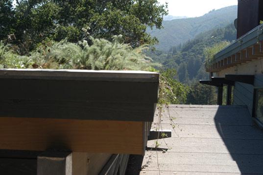 green roof, rana creek