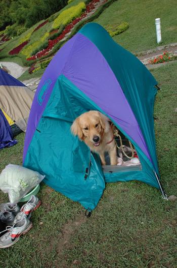 雙人帳篷+麵線02