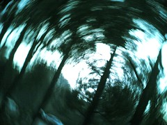 spiralling treeview #4