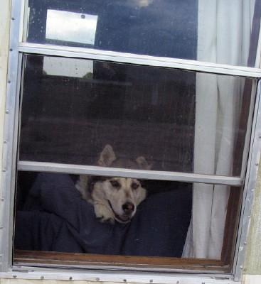Kish in window