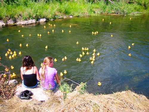 Sitting by the ducks in the bay