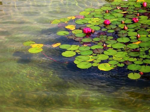 Wasserplanten