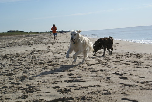 Frisket and Coco, Indian Wells Beach, Amagansett, NY, (August 13, 2006)