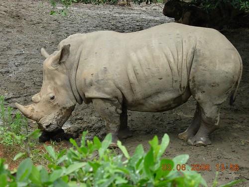 african animal