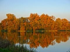 Autumn Surprise photo by algo