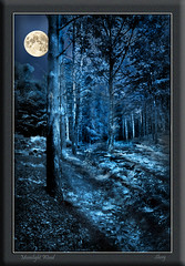 Moonlight Wood photo by MShoey1
