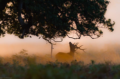 Richmond Park, London. photo by Ian Gethings