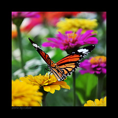 Butterfly #2 photo by e.nhan