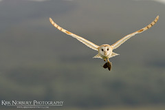 Flying Into The Wind photo by Kirk Norbury Photo